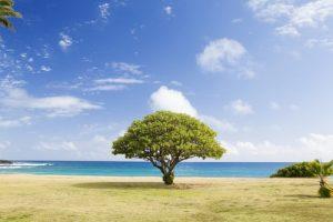 tree growing on a beach